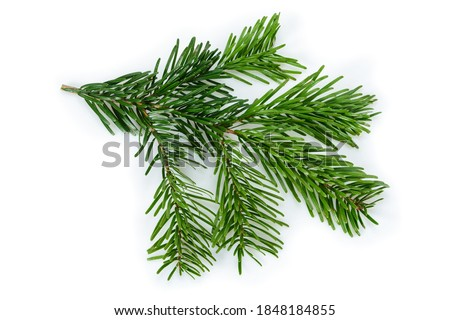 Branch of beautiful Nordmann Fir Christmas Tree. Green pine, spruce branch with needles. Isolated on white background. Close-up top view. Royalty-Free Stock Photo #1848184855