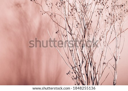 Home interior floral decor from natural dry flowers or twigs. Strong shadows on pink background Royalty-Free Stock Photo #1848255136