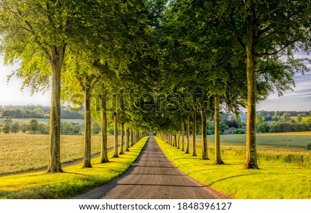 Tree tunnel road. Road through tree tunnel. Tree tunnel road view #1848396127
