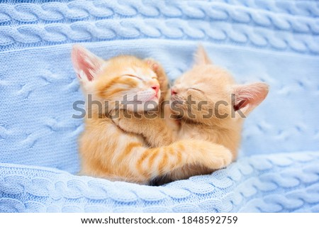 Baby cat sleeping. Ginger kitten on couch under knitted blanket. Two cats cuddling and hugging. Domestic animal. Sleep and cozy nap time. Home pet. Young kittens. Cute funny cats at home. #1848592759