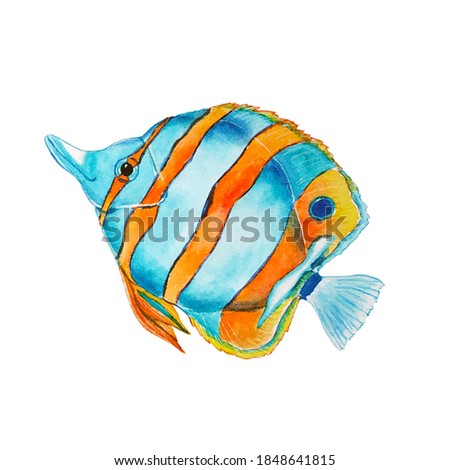 Tropical fish watercolor painting isolated on white background