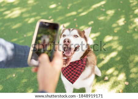Personal perspective of a photo taken by a male dog owner of a husky pet wearing a bandana sitting in the green grass