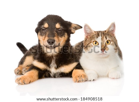 puppy and kitten lying together. isolated on white background #184908518
