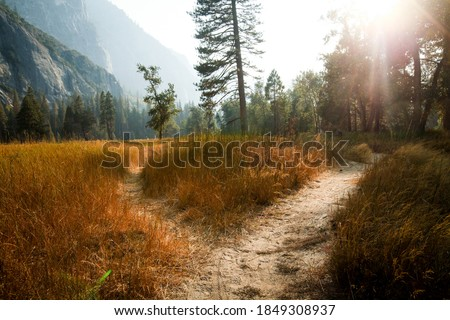 Two paths diverging in the middle of a meadow with a forest in the background  Royalty-Free Stock Photo #1849308937