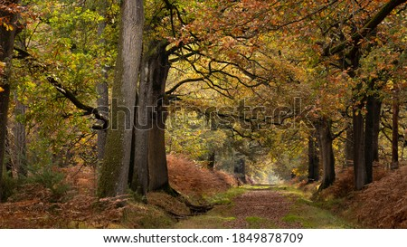 Long forest path under large and old oak trees. An autumn morning in a French forest. Lights and colors of November in France. Colorful branches and leaves. Wide trunks Royalty-Free Stock Photo #1849878709