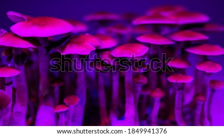 background of mushroom caps psychedelic magic Psilocybinmushrooms Royalty-Free Stock Photo #1849941376