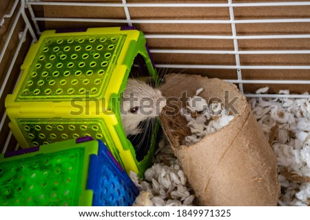 gerbil inside his little plastic house