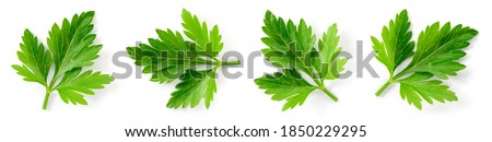Parsley. Parsley isolated. Parsley on white. Top view. #1850229295
