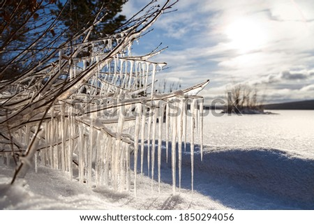 Icicles lit by the sun on the branches of a tree on the shore of a frozen reservoir in the background.Winter landscape. Royalty-Free Stock Photo #1850294056