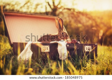 Easter bunny / Vintage style photo from a bunny in a suitcase