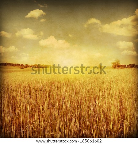 Wheat field at sunset sunset in grunge and retro  style. #185061602