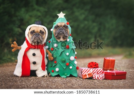 Dogs in Christmas costumes. Two French Bulldogs dresses up as funny Christmas tree and snowman with red gift boxes #1850738611