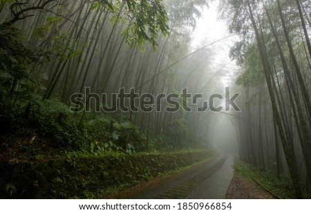 Mist forest road. Road in misty forest. Forest road in misty. Forest mist view #1850966854