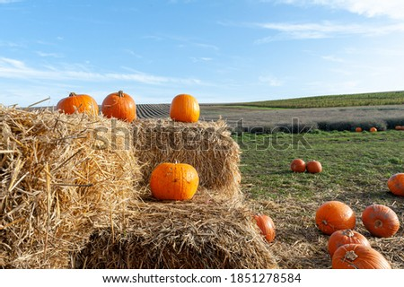 Pumpkins on straw bales on pumpking farm. #1851278584