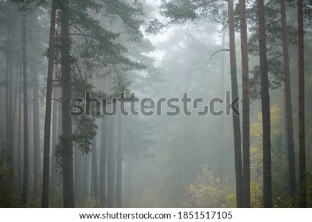 Dark atmospheric landscape of the evergreen forest in a fog at sunrise. Pine, fir, birch trees, green and golden plants close-up. Ecology, autumn, ecotourism, environmental conservation. Europe Royalty-Free Stock Photo #1851517105