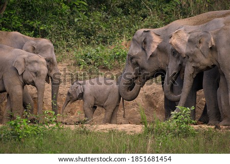Candid picture of elephant baby play among herd with green jungle background
