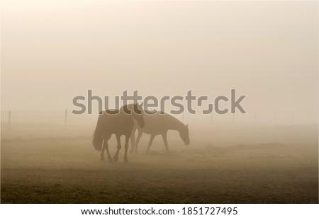 Horses grazing in mist field. Mist horses. Horses in mist #1851727495