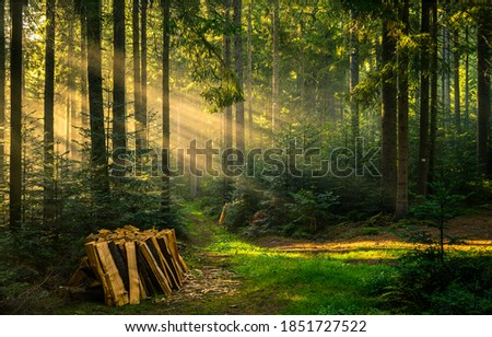 Woodpile stack in forest sunbeams. Forest sunbeams woodpile. Forest sunbeams stack. Forest sunbeams view #1851727522