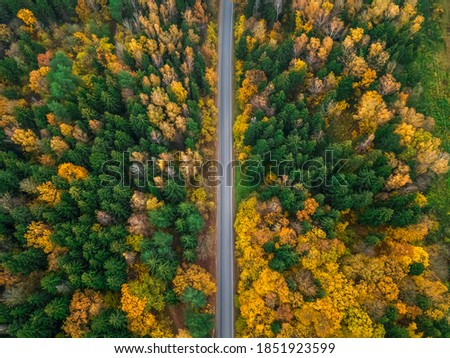 Empty straight road in a beautiful autumn forest, photo from a drone. Beautiful autumn forest landscape, top view.