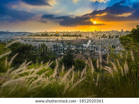 Amazing sunset over Jerusalem: view of Kidron Valley from the southern neighbourhoods to the Old City and Temple Mount; view from the Mount of Olives, with beautiful grassy foreground #1852020361