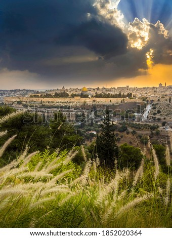 Amazing sunset over Jerusalem: view of Kidron Valley from the southern neighbourhoods to the Old City and Temple Mount; view from the Mount of Olives, with beautiful grassy foreground #1852020364