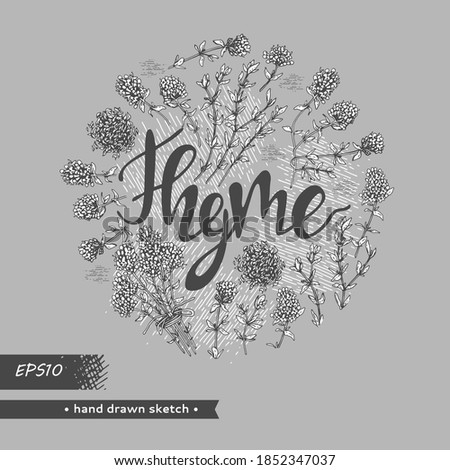 Circle filled twig of thyme with leaves and flowers and lettering Thyme . Detailed hand-drawn sketches, vector botanical illustration.   #1852347037