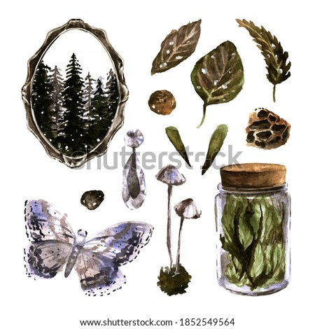 Watercolor botanical set of clip art elements. Winter nature collection. Hand drawn botany objects isolated on white background: dry herbs, butterfly, mushrooms, glass jar, winter forest, ornament.