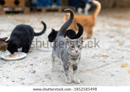 Stray cats eating on the street. A group of homeless and hungry street cats eating food given by volunteers. Feeding a group of wild stray cats, animal protection and adoption concept Royalty-Free Stock Photo #1852585498