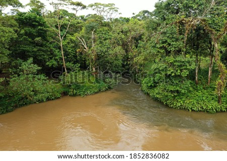 Two tropical rivers that are merging from which one river is dirty brown and the other river has cristal clear water