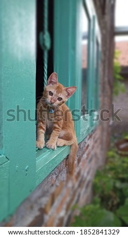 Striped red purebred kitten looking out the window.Tiny kitty pet lonely.Little baby cat looking with small eyes.Sweet adorable kitty on green wood of asian house window.Funny red cute kitten. Royalty-Free Stock Photo #1852841329