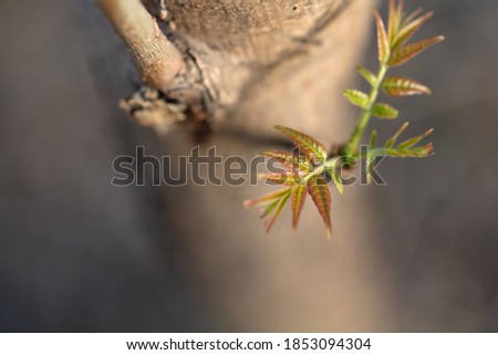 Toon Sprouts on branches in spring Royalty-Free Stock Photo #1853094304