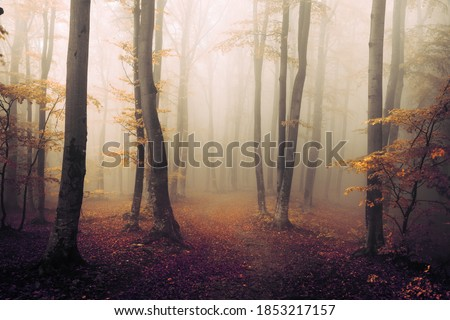 Orange feel in foggy forest during autumn day. Red and orange leaves in the woods. Fairy tale landscape in the woods Royalty-Free Stock Photo #1853217157