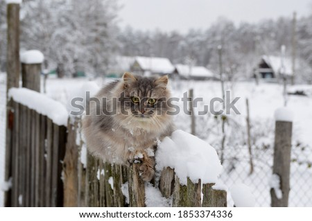 First snow. The cat sits on the fence in winter. The village cat sits in the snow on the fence. Snowing. A hungry cat is waiting for its owner in the country. Abandoned cat in a country house #1853374336