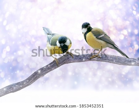 Christmas Fabulous picture with two Tit Birds sitting on Tree Branch on Winter Snow background with snowfall. Fantasy New Year landscape with cute little Songbird in snowy forest and glowing bokeh.