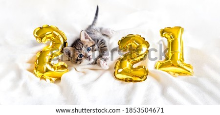Christmas cat 2021. Kitty with gold foil balloons number 2021 new year. Striped kitten on Christmas festive white background.  Royalty-Free Stock Photo #1853504671