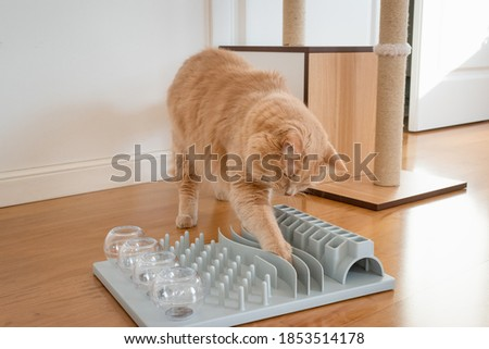 Close up on a adorable cat trying to catch a crunch. Funny kitty playing with crunchy. Cat with a challenging toys for feline. Stimulating treats games for kitten. Cats while playing with dry food.  Royalty-Free Stock Photo #1853514178