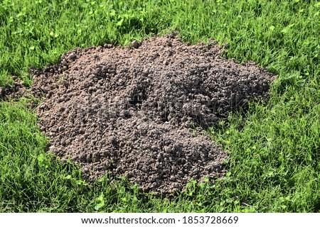 Fresh gopher hole dug in green grass