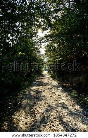 road in forest, beautiful photo digital picture