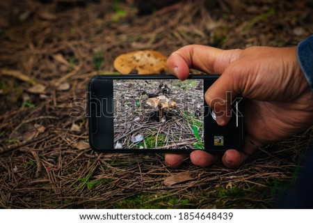 Man taking picture of the mushroom in the woods. Taking pictures using mobile phone. Mobile photography