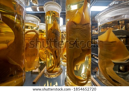 Alien like sea creatures in natural history museum exhibition Royalty-Free Stock Photo #1854652720