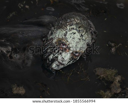 Swamp monster. A fabulous creature in a dark swamp. Scary creature at night.  Royalty-Free Stock Photo #1855566994