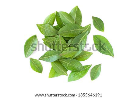 Fresh henna green leaf ( Lawsonia inermis ) isolated on white background. Top view. Flat lay.