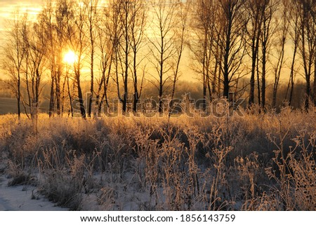 The bright morning sun shines a Sunny yellow light on trees and dry grass covered with frost. Winter frosty morning. Russia. Siberia. Royalty-Free Stock Photo #1856143759