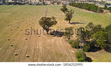 A field of round hay bales in Mulwala NSW Royalty-Free Stock Photo #1856252995