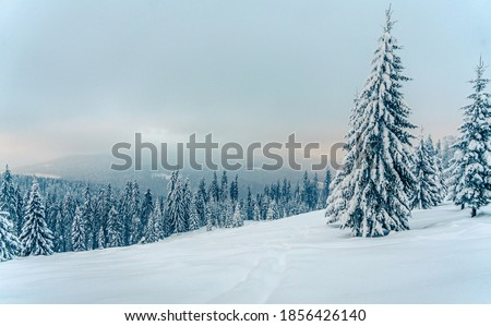 Beautiful snowy fir trees in frozen mountains landscape in sunset. Christmas background with tall spruce trees covered with snow. Winter greeting card. Happy New Year Royalty-Free Stock Photo #1856426140