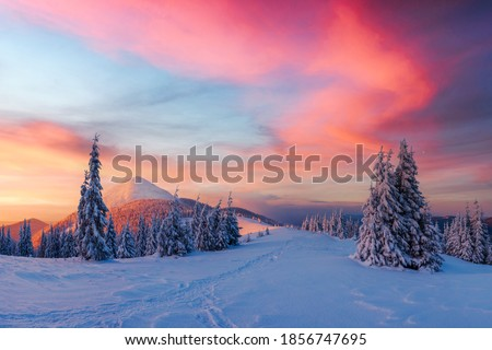 Fantastic winter landscape in snowy mountains glowing by morning sunlight. Dramatic wintry scene with frozen snowy trees at sunrise. Christmas holiday background #1856747695