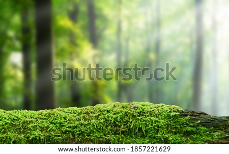Green mossy log background for product display montages Royalty-Free Stock Photo #1857221629