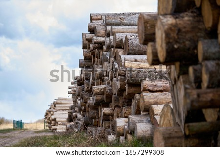 Rows of piled of logs , waiting to be processed, at a local rural lumber mill, made into lumber for construction. Royalty-Free Stock Photo #1857299308