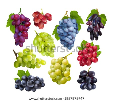 Realistic grapes set. Collection of realism style drawn 3d miscellaneous branches of green blue table grape wine autumn plants fresh fruits isolated on white background. Vine food berry objects icons  Royalty-Free Stock Photo #1857875947