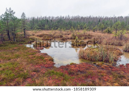 Landscape view on Witches' (Raganu) Swamp with sulphur ponds in the Kemeri National Park, Latvia on overcast November day